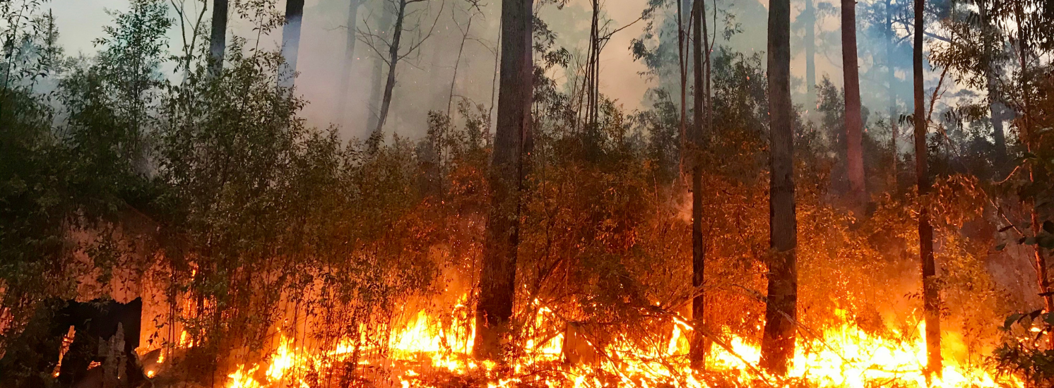 Wildfires and the Air We Breathe